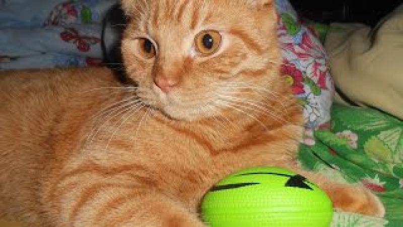 Милый надрессированный котик Авдоха