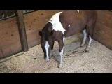 Sleep Deprived Horse