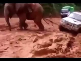 Помощь на дороге в дебрях Африки