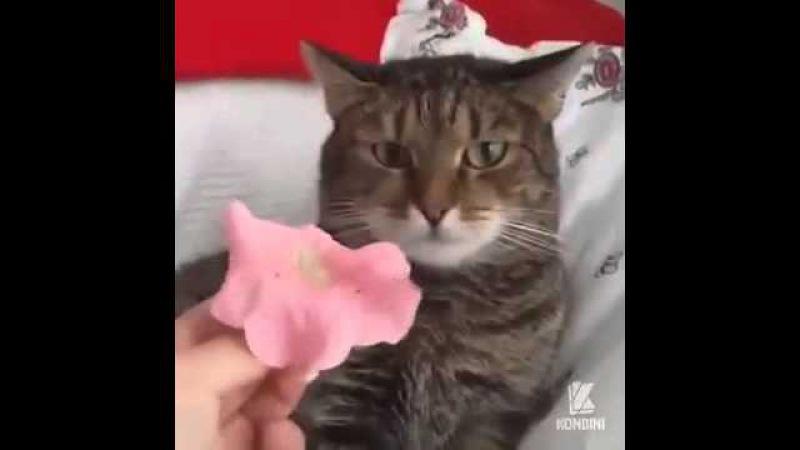 Я сегодня тебе принёс не букет из пышных роз....