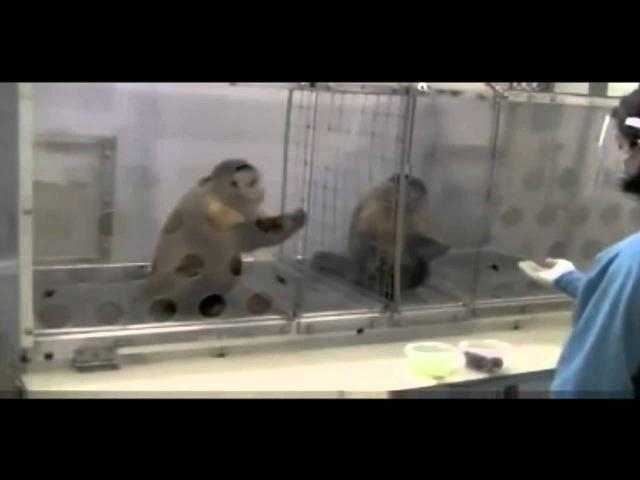 Causas do Crime | Macacos Revoltados com Injustiça (experimento)