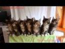 Синхронный танец семерых котят!!!