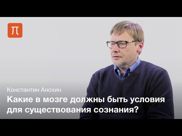 Проблема сознания и мозга — Константин Анохин