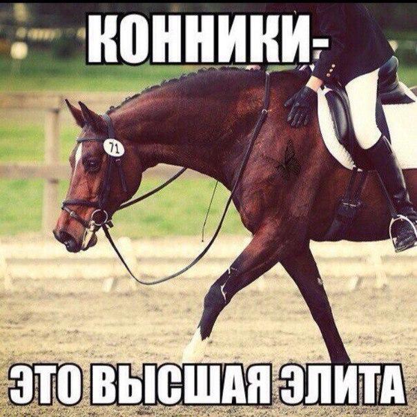 Мы-конники