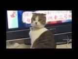 Приколы про кошек до слез видео