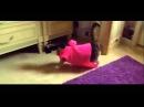 Приколы про кошек до слез видео о проделках