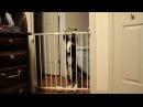 Приколы про кошек до слез видео и решетку