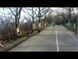Стая собак готова загрызть велосипедиста