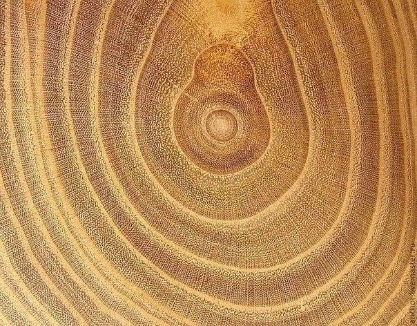 Фото на срезе дерева