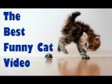 Funny Cat & Cute Kittens Fail Videos   The Best Funny Kitty Cat Video № 23   |  Morsomme Katter № 23