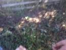 сепер чупакабри