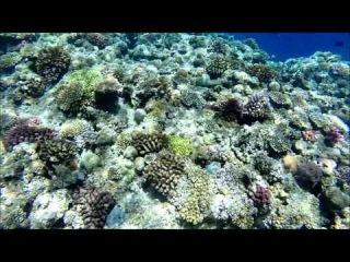 Snorkeling at Maeda Point (Okinawa, Japan) 2015-06