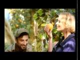 Таркан Реклама цитрусовые