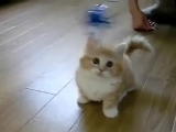Маленький котёнок играет кошки видео няшка няшный домашние животные котята.