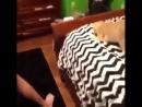 Кот повторяет за хозяйкой твёрк