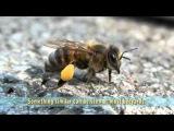 Пчелы встречают весну: взгляд изнутри улья
