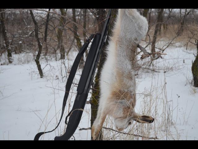 Охота на зайца. Избранное. Сезон 2014-15г.