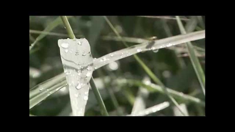 Плесень. Документальный фильм » Freewka.com - Смотреть онлайн в хорощем качестве