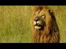 Lion Man: Kevin Richardson | South Africa