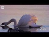 Эдвард Григ -Утро (Edvard Grieg- Morning)