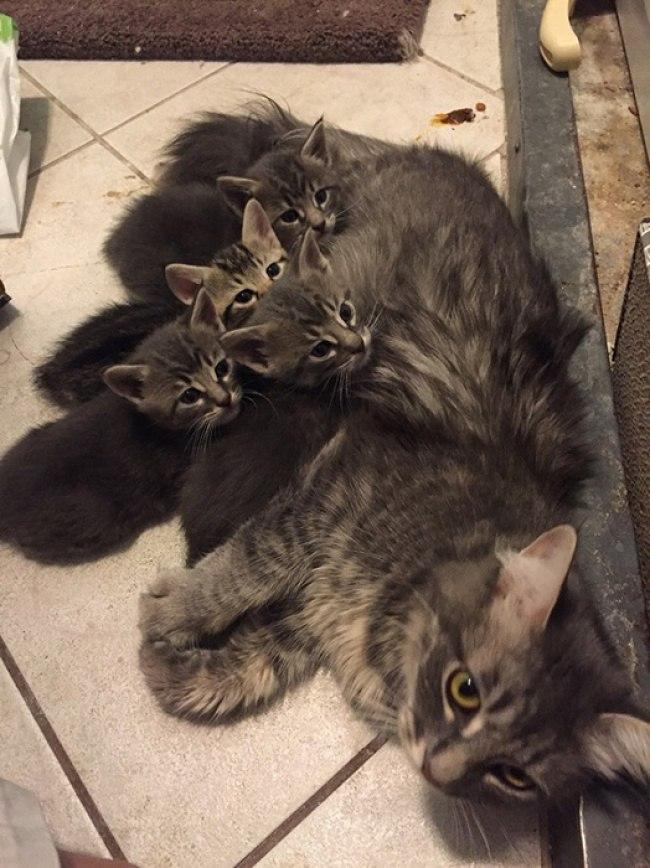 Fg78Zo e 18 - Самые красивые многодетные мамы со своими детьми (ФОТО)