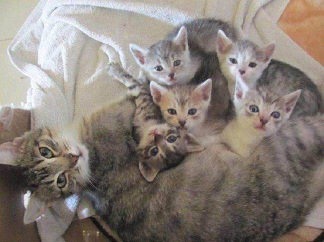 vlbZ3U8Frz4 - Самые красивые многодетные мамы со своими детьми (ФОТО)
