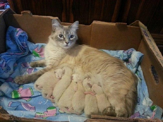 rN0RFFeirEI - Самые красивые многодетные мамы со своими детьми (ФОТО)