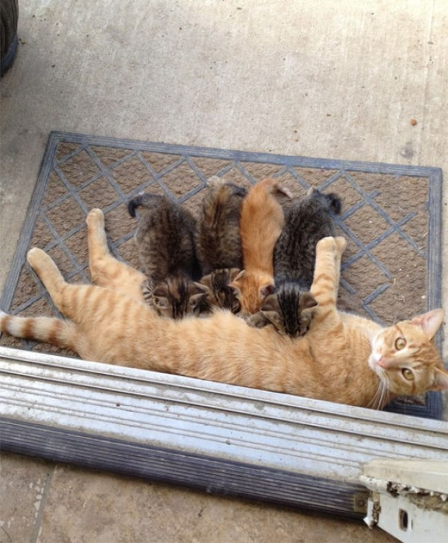 rIFwnp75Ie8 - Самые красивые многодетные мамы со своими детьми (ФОТО)