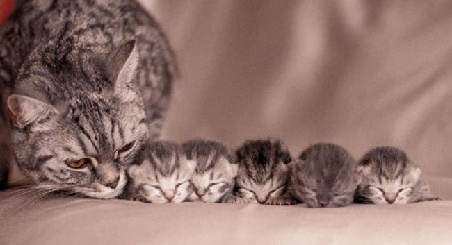 fhGqza0SPCM - Самые красивые многодетные мамы со своими детьми (ФОТО)