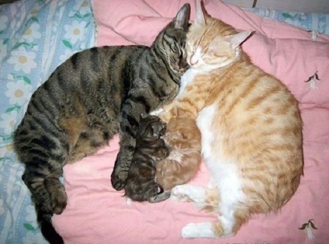gIjsH3voDGM - Самые красивые многодетные мамы со своими детьми (ФОТО)