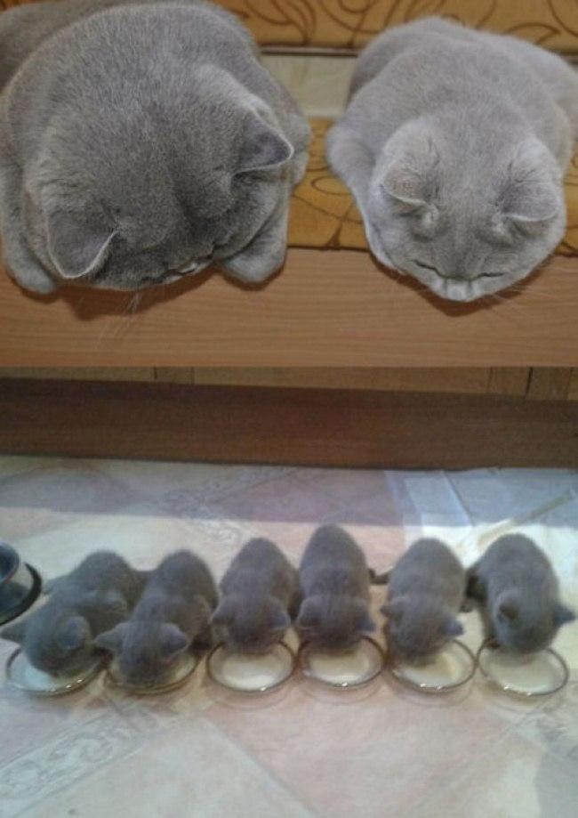 kAX9dbvoxYo - Самые красивые многодетные мамы со своими детьми (ФОТО)