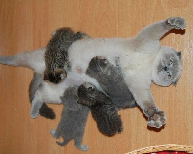 ta76ElWrfdY - Самые красивые многодетные мамы со своими детьми (ФОТО)