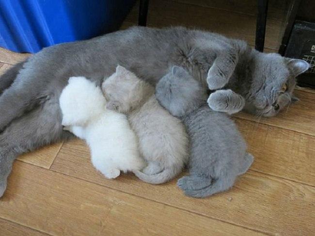 lq7JzF7vmCs - Самые красивые многодетные мамы со своими детьми (ФОТО)