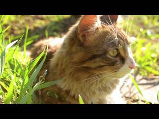 Cat basking in the sun