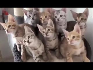 ТОП 11:  9 минут! ПОДБОРКА приколов с ЖИВОТНЫМИ // Смешные кошки, собаки и др ЖИВОТНЫЕ 2015