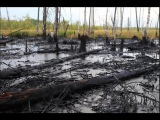 Нефть разлилась на трассе М-5 под Самарой в результате ДТП