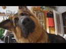 Смешные животные Funny Animals 2