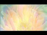 Медитация трансформация ВЕРА и ИЗОБИЛИЕ Людмила Сыропятова (1)