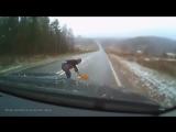 Животные на дороге! Человеческая доброта!!! ¦ Animals on the road