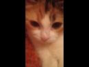 котенка-найденыш Ичи, 3 мес