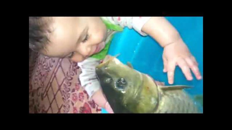 Ребёнок целуется с рыбой прикол