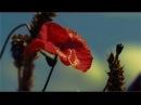 Совершенный Бог - Песня (Л. Дяченко) HD