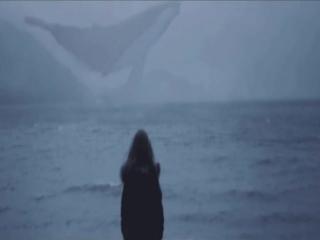 Поэт без усов – Вы видели как умирают киты?
