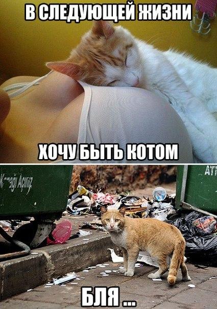 Vbdt2jb6sBA - Как превратиться в кота. Помощь мага