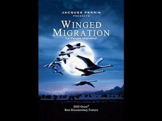 Птицы. И потрясающий саундтрек Бруно Куле!