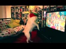 Labrador dog celebrates goal world cup 2014 Portugal vs USA