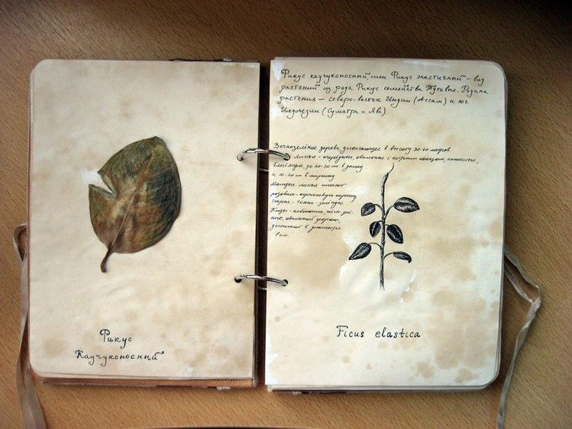 Альбом для гербария мастер класс