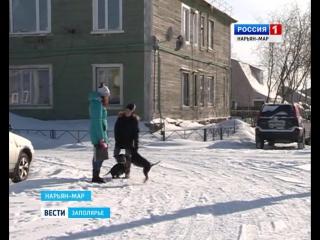"""""""Россия-1 Нарьян-Мар"""" В окружной столице появится специализированое место для выгула собак"""