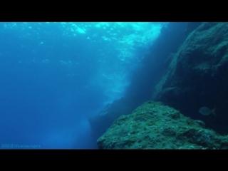 «Азорские острова (1). Азорские острова. Акулы, киты, скаты» (Документальный, 2011)