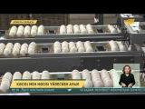 Ауылдағы құс фабрикасы отандық нарықты сапалы өніммен қамтамасыз етуде